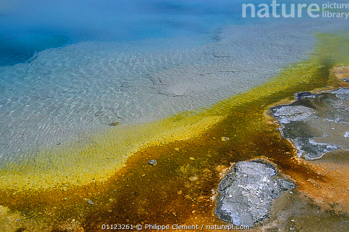 Tthermophile mats formed by algae, bacteria and other heat loving micro-organisms, Black Sand Basin, Yellowstone National  ,  COLOURFUL,GEOTHERMAL,LANDSCAPES,MINERALS,NORTH AMERICA,NP,RESERVE,US,WATER,Geology,National Park,USA  ,  Philippe Clement