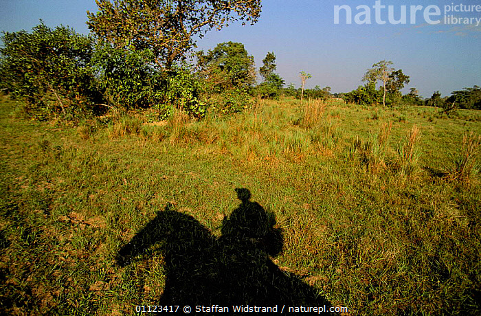 Shadow of Cowboy / Vaqueiro on horseback, Pantanal, Brazil  ,  HORSE,LANDSCAPES,PEOPLE,RIDING,TRADITIONAL,WETLANDS,WORKING,SOUTH-AMERICA  ,  Staffan Widstrand