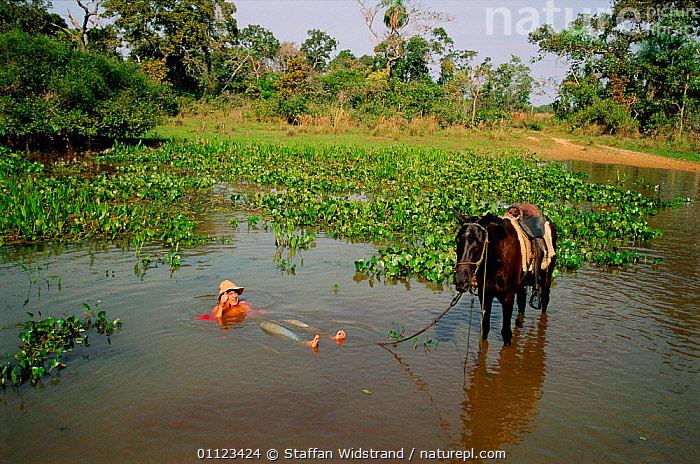 Cowboy / Vaqueiro bathing in river, Pantanal, Brazil.  ,  BEHAVIOUR,HORSE,HUMOROUS,LANDSCAPES,MAN,PEOPLE,TRADITIONAL,WASHING,WETLANDS,Concepts,SOUTH-AMERICA  ,  Staffan Widstrand