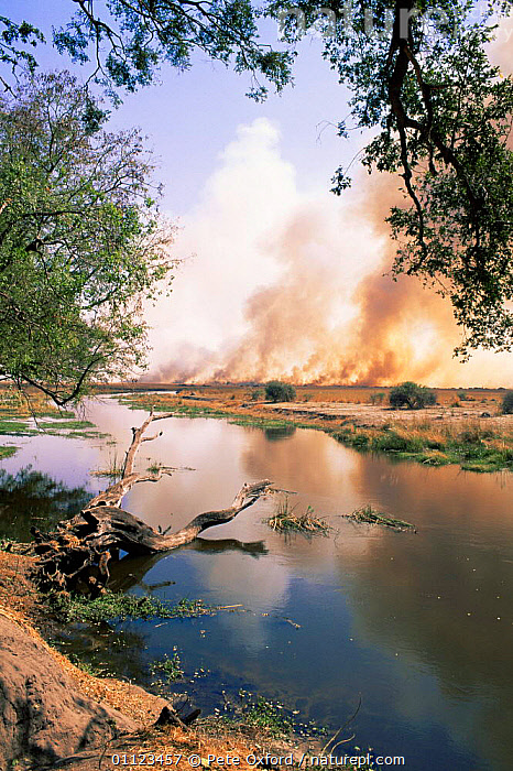 Bush fire besides river at Linyanti, Botswana  ,  AFRICA,FIRE,RIVERS,SOUTHERN AFRICA,VERTICAL  ,  Pete Oxford