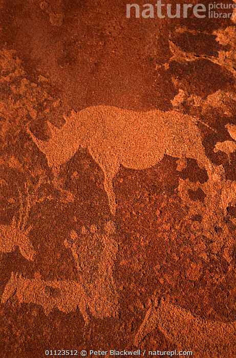 Rock carvings at Twyfelfontain, Namibia  ,  AFRICA,ANCIENT,CAVE PAINTINGS,CAVES,CULTURES,PEOPLE,RHINO,RHINOCEROS,SOUTHERN AFRICA,VERTICAL rhino, rhinoceros, rhinos,  ,  Peter Blackwell
