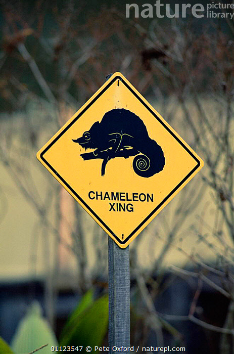 Chameleon road crossing warning sign, Madagascar  ,  AFRICA,MADAGASCAR,REPTILES,ROADS,SIGNS,TRAFFIC,VERTICAL  ,  Pete Oxford