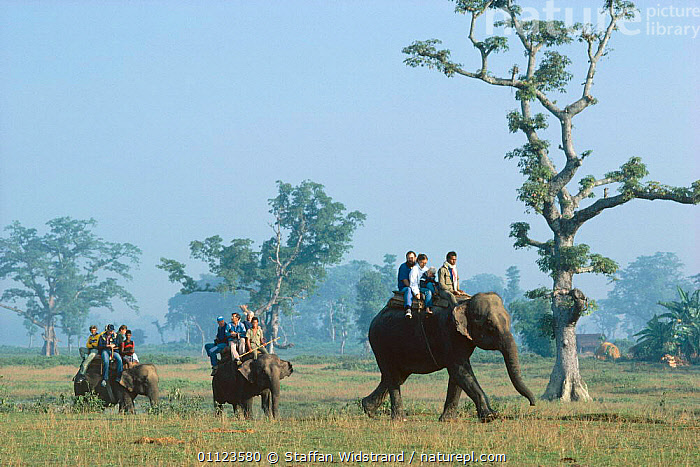 Tourists on Elephant safari, Chitwan NP, Nepal.  ,  ASIA,ECOTOURISM,LANDSCAPES,MAMMALS,PEOPLE,PROBOSCIDS,RESERVE,THREE,TOURISM,WATCHING,WILDLIFE,WORKING,INDIAN-SUBCONTINENT  ,  Staffan Widstrand