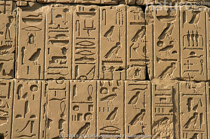 Hieroglyphic bas relief stone carving on side of monument with animals and birds, Egypt, North Africa  ,  AFRICA,ANCIENT,ANIMALS IN ART,BIRDS,CARVINGS,CULTURES,HIEROGLYPHS,LANGUAGE,MONUMENTS,NORTH AFRICA,OLD,SCRIPT,SYMBOLS,NORTH-AFRICA  ,  Staffan Widstrand