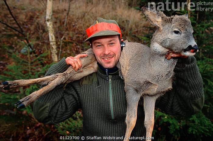 Hunter with dead Roe deer, Sweden.  ,  HUNTING FOOD,LANDSCAPES,MAN,PEOPLE,SCANDINAVIA,SPORT,Europe, Scandinavia  ,  Staffan Widstrand