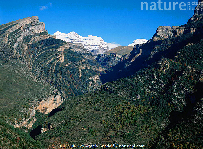 Looking into Valley de Anisclo with Macizo de las tres sorores in background, Ordesa NP, Pyrenees, Spain, Europe  ,  ALPINE,CONIFEROUS,EUROPE,FORESTS,HIGHLANDS,LANDSCAPES,MOUNTAINS,NP,peaks,pyrenees,RESERVE,SPAIN,valleys,National Park  ,  Angelo Gandolfi