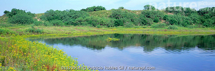 Laguna Madre surrounded by spring flowers, Tamaulipas, Mexico  ,  SAND DUNES,LAKES,DUNES,LANDSCAPES,PANORAMIC,SAND,WATER,Deserts,CENTRAL-AMERICA  ,  Patricio Robles Gil