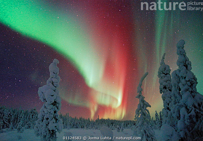 Northern lights, Lapland, Finland  ,  COLOURFUL,BOREAL FOREST,COLD,COLOURS,OUTSTANDING,STARS,ARCTIC,LANDSCAPES,NIGHT,SCANDINAVIA,SKIES,SKY,SNOW,TREES,WINTER,Plants, Europe, Europe, Europe, Europe, Europe  ,  Jorma Luhta