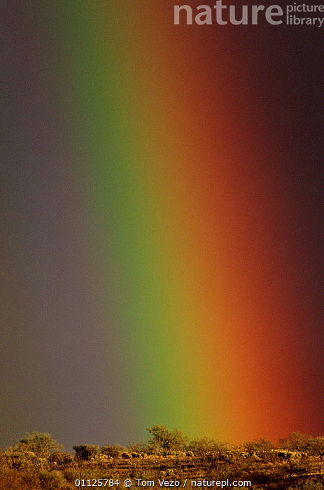 Rainbow over the desert, Arizona, USA  ,  VERTICAL,WEATHER,NORTH AMERICA,RAINBOWS,LANDSCAPES,COLOURFUL,COLOURS,USA  ,  Tom Vezo