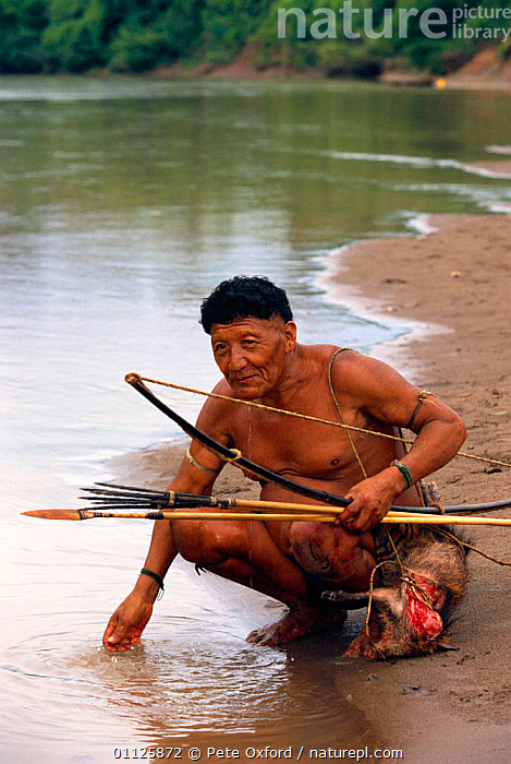 Yaminahua indian with hunted Peccary, Boca Mishagua River, Amazonia, Peru  ,  ARROW,BOW,HUNTING FOOD,LANDSCAPES,MAMMALS,MAN,PEOPLE,RIVERS,TRADITIONAL,TRIBES,TROPICAL RAINFOREST,VERTICAL,SOUTH-AMERICA  ,  Pete Oxford