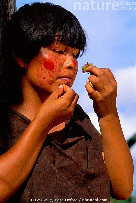 Campa indian painting her face with achiote, Lower Urubamba river, Amazonia, Peru  ,  DECORATION,LANDSCAPES,PEOPLE,TRADITIONAL,TRIBES,TROPICAL RAINFOREST,VERTICAL,WOMAN,SOUTH-AMERICA  ,  Pete Oxford