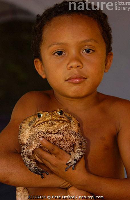 Child holding Roccoco toad {Bufo paracnemis} Cerrado, Piaui state, Brazil Marcio d'Oliviera  ,  AMPHIBIANS,BIG,CHILDREN,LARGE,OLIVIERA,PEOPLE,SIZE,SOUTH AMERICA,TOADS,VERTICAL,Anura  ,  Pete Oxford