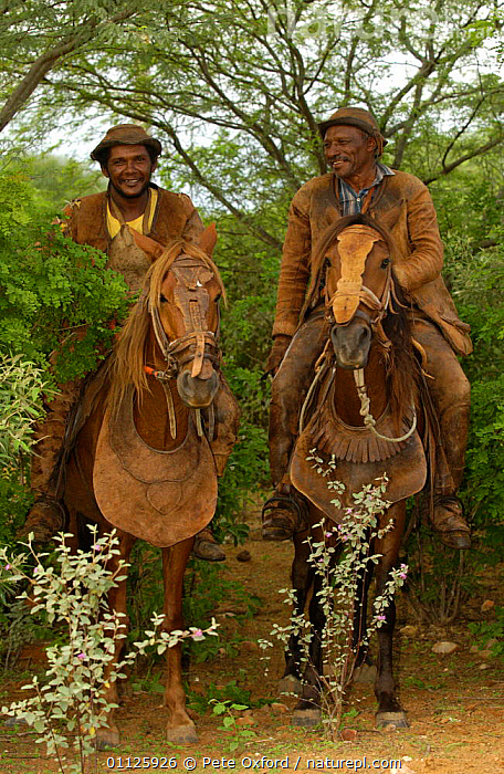 Brazilian 'Vaquieros' cowboys, Caatinga, Piaui State, NE Brazil  ,  HORSE,HORSEBACK,HORSES,LANDSCAPES,MEN,PEOPLE,RIDING,TRADITIONAL,TWO,VERTICAL,SOUTH-AMERICA  ,  Pete Oxford