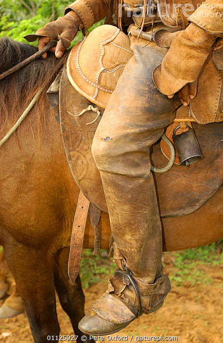 Leather chaps of Brazilian 'Vaquieros' cowboy, Caatinga, Piaui State, NE Brazil  ,  LANDSCAPES,LEGS,PEOPLE,PROTECTION,RIDING,TRADITIONAL,VERTICAL,SOUTH-AMERICA  ,  Pete Oxford