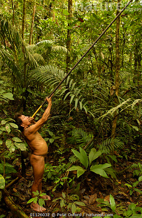 Huaorani indian man with blow gun, indigenous rainforest tribe, Napo Province, Ecuador.  ,  BEHAVIOUR,HUNTING FOOD,INDIANS,LANDSCAPES,NAKED,PEOPLE,PORTRAITS,TRIBES,TROPICAL RAINFOREST,VERTICAL  ,  Pete Oxford