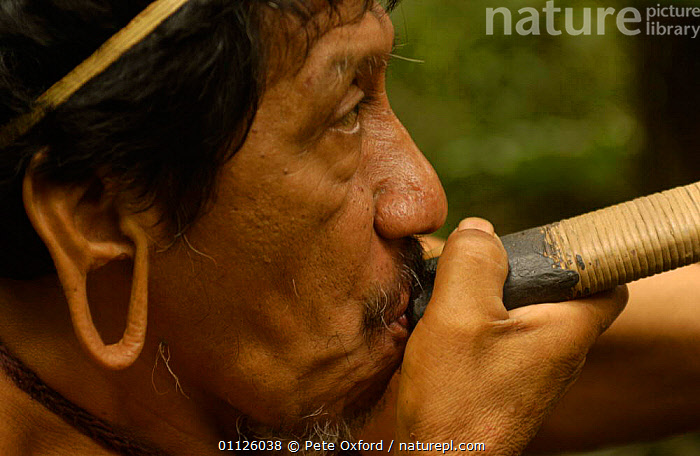 Huaorani indian man with blow gun, indigenous tribe, Napo Province, Ecuador. Pirahua  ,  BEHAVIOUR,BLOWING,HUNTING FOOD,INDIANS,LANDSCAPES,PEOPLE,PORTRAITS,RAINFOREST,TRADITIONAL,TRIBES,TROPICAL RAINFOREST  ,  Pete Oxford