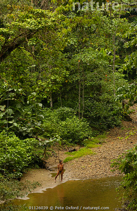 Huaorani indian with fishing spear, rainforest tribe, Napo Province, Ecuador.  ,  HABITAT,HUNTING FOOD,INDIANS,INDIGENOUS,LANDSCAPES,PEOPLE,TRADITIONAL,TRIBES,TROPICAL RAINFOREST  ,  Pete Oxford