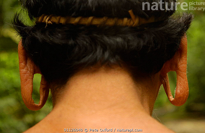Huaorani indian back of head with extended ear lobes, Napo Province, Ecuador. Tepa boy  ,  DETAIL,EARS,INDIANS,INDIGENOUS,LANDSCAPES,LOBE,PEOPLE,PORTRAITS,RAINFOREST,TRIBE,TRIBES,TROPICAL RAINFOREST  ,  Pete Oxford
