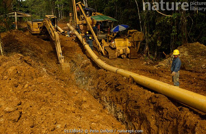 Oil pipeline, rainforest, Napo province, Ecuador, takes oil to coast for export  ,  CRUDE OIL,DEFORESTATION,ENERGY,EXPLOITATION,LANDSCAPES,LAYING,MACHINERY,PEOPLE,PIPE,TROPICAL RAINFOREST  ,  Pete Oxford
