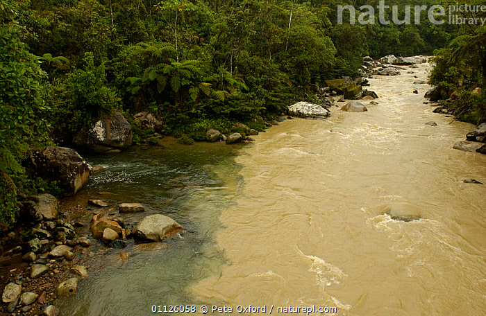Meeting of 'Black Water' + 'White Water', Mondayacu river, Amazonia, Ecuador  ,  ANDEAN,DERIVED,EROSION,FOREST,INTERESTING,LADEN,LANDSCAPES,LOADED,RIVERS,SILT,TANNIN,TROPICAL RAINFOREST  ,  Pete Oxford