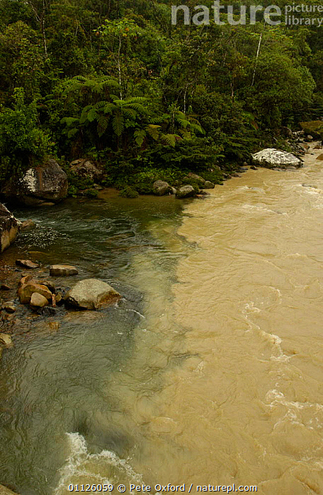 Meeting of 'Black Water' + 'White Water', Mondayacu river, Amazonia, Ecuador  ,  ANDEAN,DERIVED,EROSION,FOREST,INTERESTING,LADEN,LANDSCAPES,LOADED,RIVERS,SILT,TANNIN,TROPICAL RAINFOREST,VERTICAL  ,  Pete Oxford