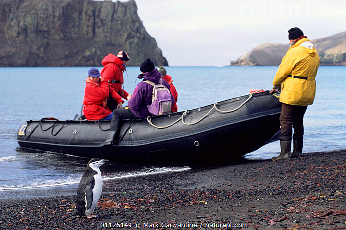 Chinstrap penguin and tourists, Whalers Bay, Deception Is, South Shetland Is  ,  BIRDS,BOATS,FLIGHTLESS,COASTS,PENGUINS,PEOPLE,WILDLIFE WATCHING,TOURISM,Seabirds, Seabirds  ,  Mark Carwardine