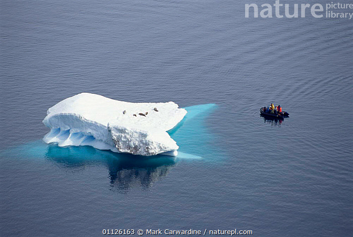 Tourists in dinghy watching Crabeater seals on iceberg, Antarctica.  ,  MAMMALS,GROUPS,ICE,ICEBERGS,PINNPEDS,PEOPLE,AERIAL,ANTARCTICA,BOATS,TOURISM,WILDLIFE  ,  Mark Carwardine