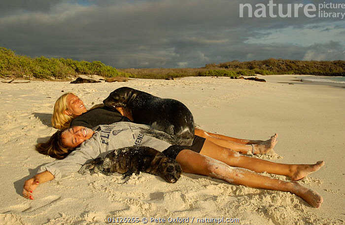 Galapagos sealions lying on tourists, Hood Is, Galapagos {Zalophus californianus}  ,  BABIES,BEACHES,ECOTOURISM,FAMILIES,FRIENDSHIP,HAPPY,HUMOROUS,MAMMALS,PEOPLE,PINNIPEDS,SUNBATHING,TOURISM,WOLLEBACKE,Concepts,SOUTH-AMERICA,CARNIVORES  ,  Pete Oxford