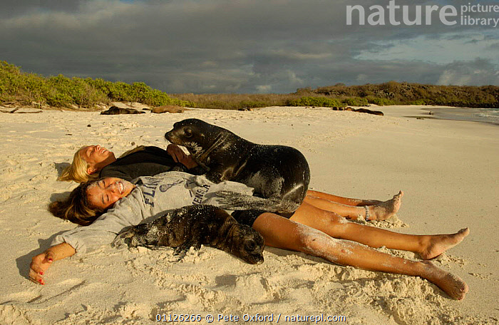 Galapagos sealions lying on tourists, Hood Is, Galapagos {Zalophus californianus}  ,  BABIES,BEACHES,ECOTOURISM,FAMILIES,FRIENDSHIP,HAPPY,HUMOROUS,MAMMALS,PEOPLE,PINNIPEDS,SUNBATHING,TOURISM,WOLLEBACKE,Concepts,SOUTH-AMERICA, CARNIVORES , CARNIVORES  ,  Pete Oxford