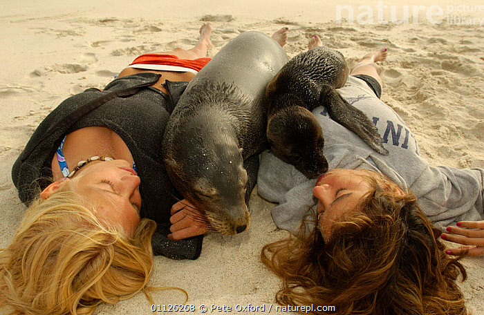 Galapagos sealions lying on tourists, Hood Is, Galapagos.  ,  BABIES,BEACHES,ECOTOURISM,FAMILIES,FRIENDSHIP,GIRLS,HAPPY,HUMOROUS,MAMMALS,PEOPLE,PINNIPEDS,SUNBATHING,TOURISM,WOLLEBACKE,Concepts,SOUTH-AMERICA, CARNIVORES , CARNIVORES , CARNIVORES  ,  Pete Oxford