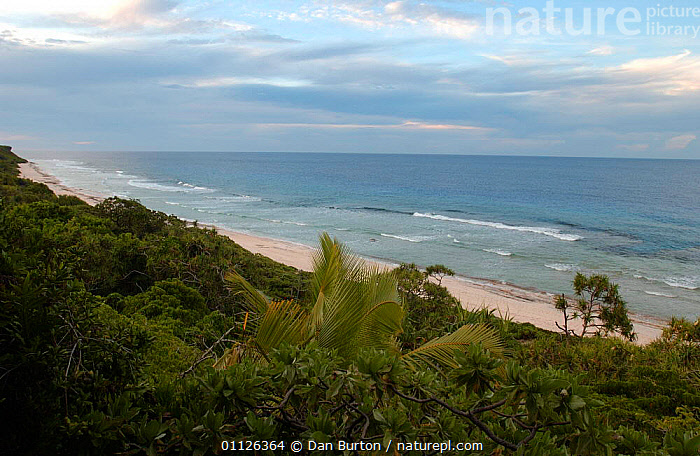 Coastal landscape, Henderson Is, Pitcairn Is, South Pacific  ,  BEACHES,COASTS,LANDSCAPES,OCEANIA,WOODLANDS  ,  Dan Burton