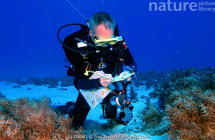 Diver surveying coral reef, Bounty Bay, Pitcairn Island, South Pacific  ,  CORAL REEFS,PEOPLE,RESEARCH,UNDERWATER,WATER,PURSUITS,WRITING,Marine  ,  Dan Burton