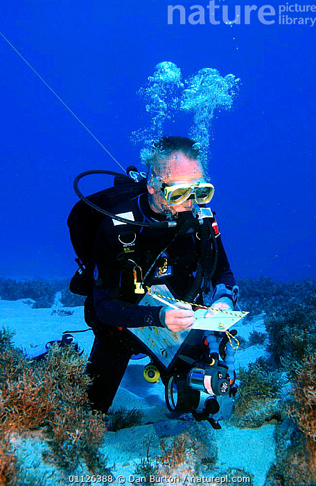 Diver surveying coral reef, Bounty Bay, Pitcairn Island, South Pacific.  ,  CORAL REEFS,PACIFIC,PEOPLE,RESEARCH,UNDERWATER,VERTICAL,WATER,PURSUITS,WRITING,Marine  ,  Dan Burton