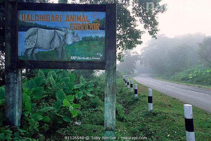 Rhinoceros warning sign on road in Animal Corridor, Kaziranga National Park, India  ,  RESERVE,ROADS,SIGNS,LANDSCAPES,NP,ASIA,National Park,INDIA,INDIAN-SUBCONTINENT , rhino, rhinos, rhinoceros, , rhino, rhinos, rhinoceros,  ,  Toby Sinclair