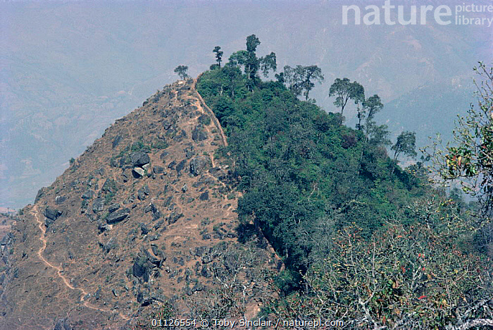 Wall separating protected and unprotected hillside on edge of Kathmandu valley, Nepal  ,  DEFORESTATION,ASIA,POPULATION,HORRIFIC,HORIZONTAL,LANDSCAPES,TREES,Plants,INDIAN-SUBCONTINENT  ,  Toby Sinclair
