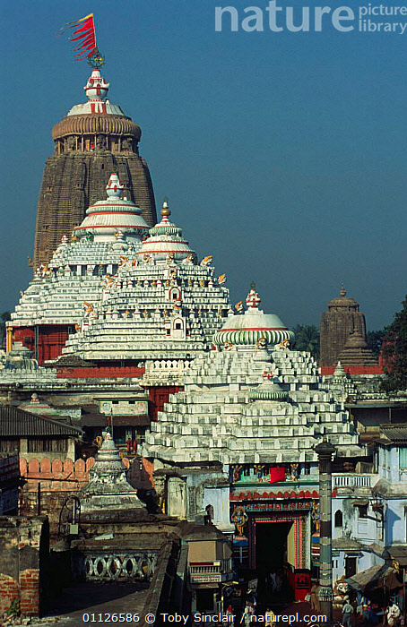 Hindu temple, Puri, Orissa, India  ,  ASIA,BUILDINGS,CITIES,HINDU,HINDUISM,INDIAN SUBCONTINENT,ORNATE,SOUTHERN INDIA,TEMPLES,URBAN,VERTICAL,INDIAN-SUBCONTINENT,INDIA  ,  Toby Sinclair