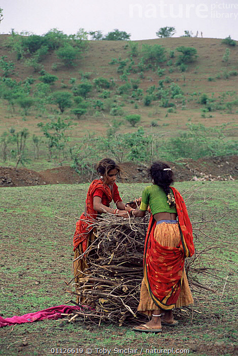 Women collecting firewood, Maharashtra, India  ,  LANDSCAPES,PEOPLE,FIRE,GIRLS,FUEL,ASIA,TRADITIONAL,WOOD,VERTICAL,INDIAN-SUBCONTINENT,INDIA  ,  Toby Sinclair