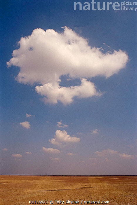 Nature Picture Library - Desert landscape, Gujarat, India - Toby
