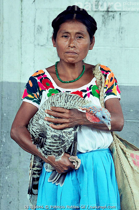 Nahuatl woman with turkey, Mexico  ,  VERTICAL,BIRDS,DOMESTIC,FOWL,LANDSCAPES,POULTRY,PEOPLE,CENTRAL-AMERICA  ,  Patricio Robles Gil