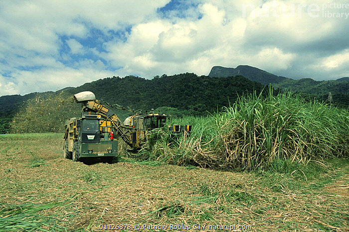 Sugar cane harvest, Cairns, Queensland, Australia  ,  AGRICULTURE,AUSTRALASIA,AUSTRALIA,CROPS,EXPORT,FARMING,HARVESTING,LANDSCAPES,MONOCULTURE,TRADE,VEHICLES,WORKING  ,  Patricio Robles Gil