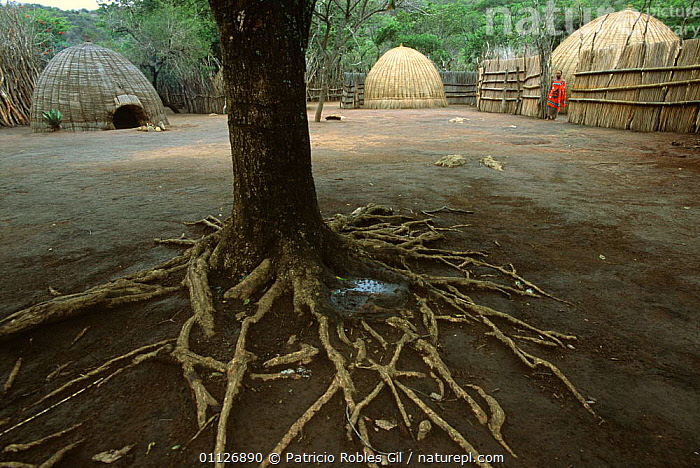 Mantenga village, Swaziland, Southern Africa 2001  ,  AFRICA,BOMA,BUILDINGS,CULTURES,HOUSES,HUTS,PEOPLE,ROOTS,SOUTHERN AFRICA,TRADITIONAL,TRIBES  ,  Patricio Robles Gil