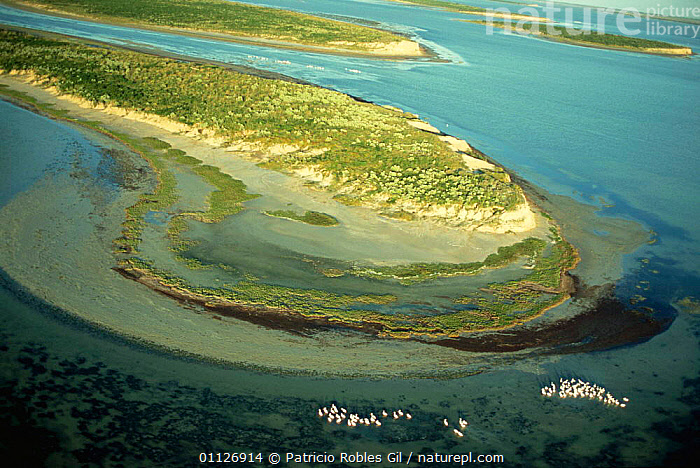 Aerial view of Tamaulipas wetlands with American white pelicans, Gulf of Mexico, Mexico  ,  AERIALS,ATLANTIC,BIRDS,CENTRAL AMERICA,COASTAL WATERS,COASTS,FLOCKS,GROUPS,LANDSCAPES,MEXICO,PELICANS,SEABIRDS,WATER,WETLANDS,CENTRAL-AMERICA  ,  Patricio Robles Gil