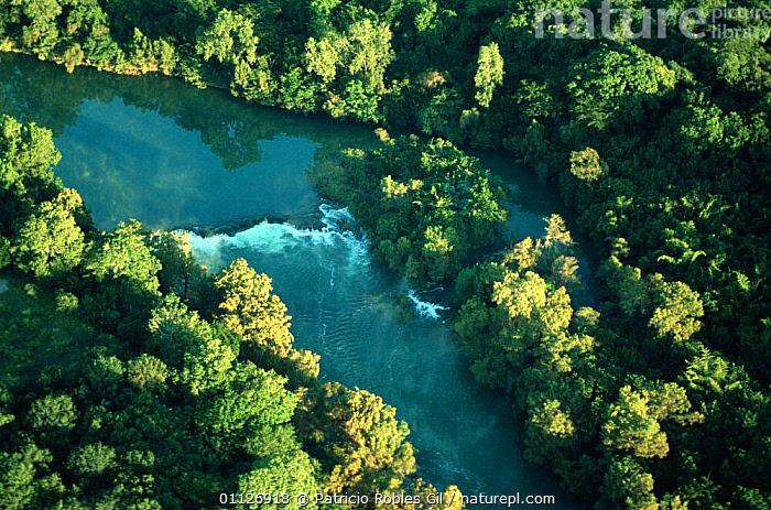 Aerial view of Guayalejo river, Tamaulipas, Mexico  ,  AERIALS,CENTRAL AMERICA,LANDSCAPES,MEXICO,RIVERS,TROPICAL,WOODLANDS,CENTRAL-AMERICA  ,  Patricio Robles Gil