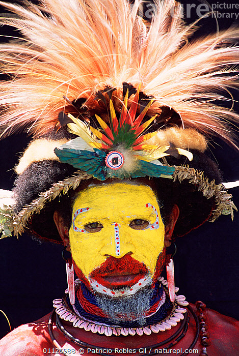 Warrior with Bird of paradise feathers in head-dress, Huli people, Papua New Guinea, 2001  ,  VERTICAL,TRIBES,LANDSCAPES,MAN,PAPUA NEW GUINEA,PORTRAITS,PORTRAIT,PAINTED,BIRDS OF PARADISE,DECORATED,FACES,FACE PAINTS,WEST-AFRICA  ,  Patricio Robles Gil