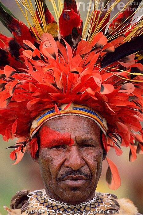 Feathered head-dress of warrior, Wahgi valley people, Mt Hagen, Papua New Guinea, 2001  ,  FEATHERS,FACE,ASIA,BIRDS OF PARADISE,BIRDS,LANDSCAPES,HEADDRESS,MAN,PAPUA NEW GUINEA,PORTRAITS,PORTRAIT,PAINTS,TRIBES,VERTICAL,WEST-AFRICA  ,  Patricio Robles Gil