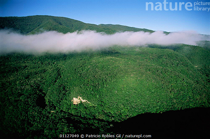 Aerial view of cloud over Atlas Cimas Reserve, Tamaulipas, MexicO  ,  CLOUDS,FOREST,CANOPY,LANDSCAPES,WOODLANDS,Weather,CENTRAL-AMERICA  ,  Patricio Robles Gil