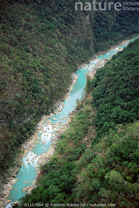 Aerial view of Tampaon river canyon gorge, Huasteca Potosina, Mexico  ,  VERTICAL,RIVERS,LANDSCAPES,AERIALS,CENTRAL-AMERICA  ,  Patricio Robles Gil