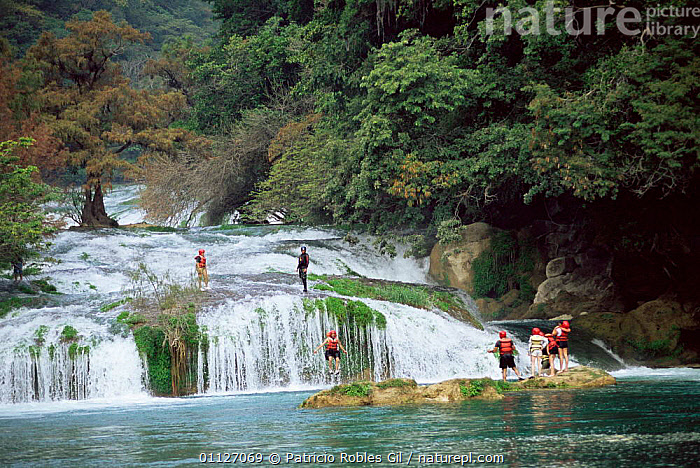 Tourists canyoning down Micos waterfalls, Huasteca Potosina, Mexico  ,  LANDSCAPES,LEISURE,JUMPING,MINAS,PEOPLE,RIVER,RIVERS,TOURISM,SPORT,CENTRAL-AMERICA  ,  Patricio Robles Gil
