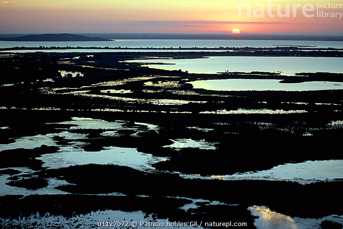 Aerial view of Tampico wetlands at sunset, Tamaulipas, Mexico  ,  AERIALS,CENTRAL AMERICA,COASTAL WATERS,COASTS,DUSK,LANDSCAPES,MARINE,MEXICO,PEACEFUL,SUNSET,TROPICAL,WATER,WETLANDS,Concepts,CENTRAL-AMERICA  ,  Patricio Robles Gil