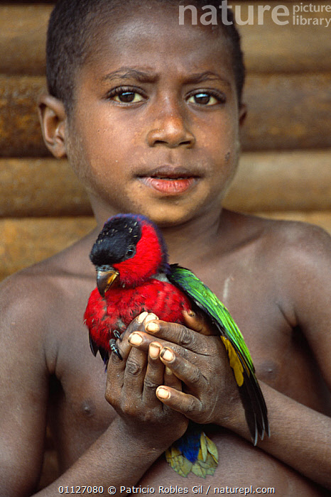 Amongabi boy with pet Western black capped lory, Papua New Guinea  ,  ASIA,BIRDS,BOY,CAPTIVITY,CHILDREN,CULTURES,PAPUA NEW GUINEA,PARROTS,PEOPLE,PETS,SOUTH EAST ASIA,TRIBES,TROPICAL,VERTICAL,YOUNG,WEST-AFRICA,Africa  ,  Patricio Robles Gil